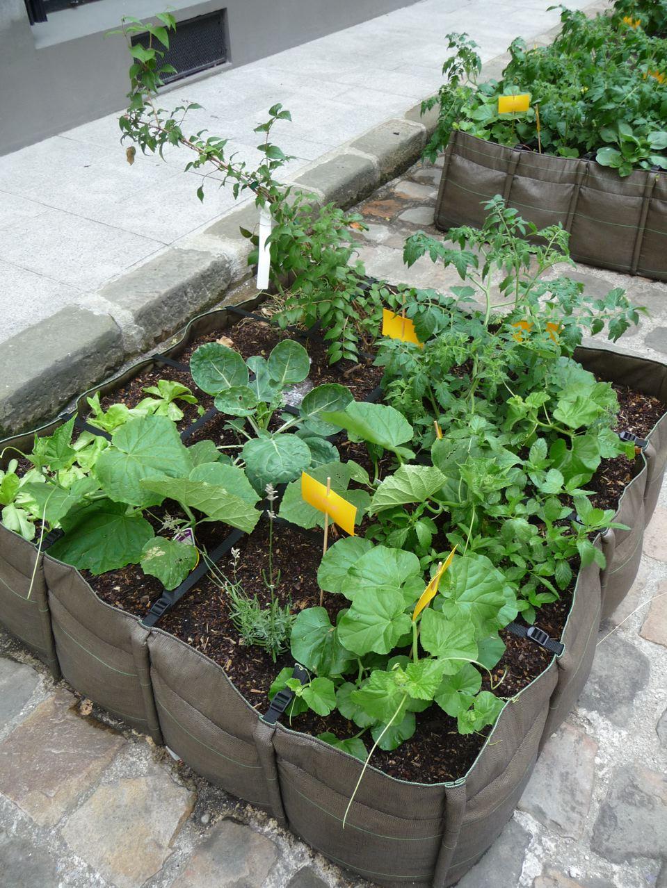 Culture de légumes et petits potagers dans Paris