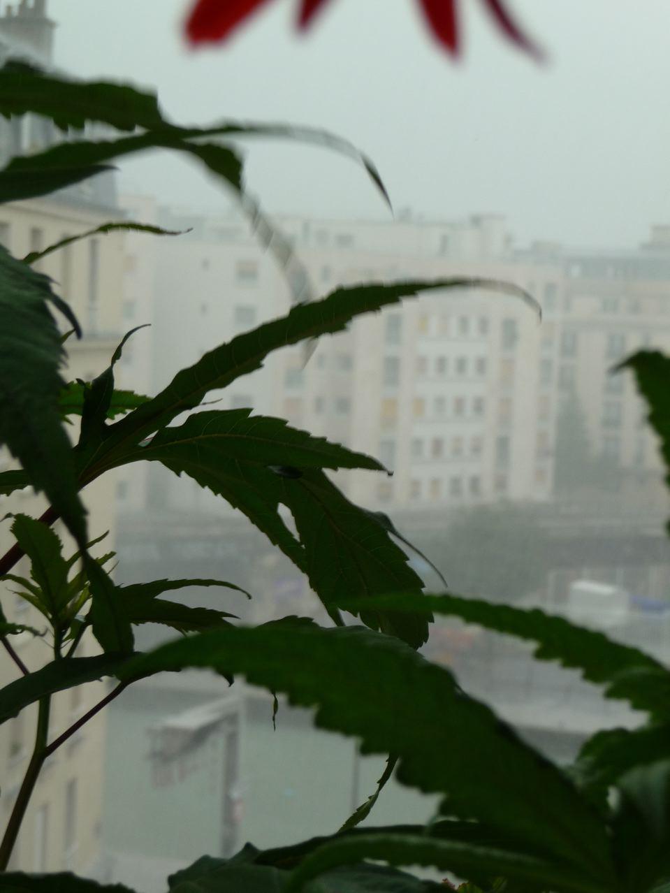 Intempéries à Paris : orages, fortes pluies et grêle