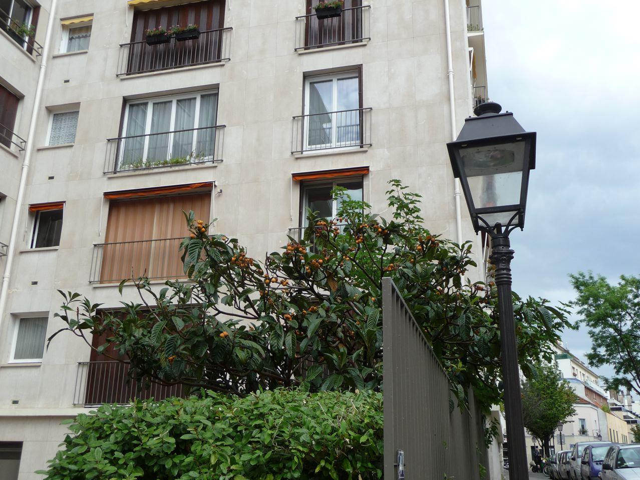 Arbre fruitier exotique dans Paris