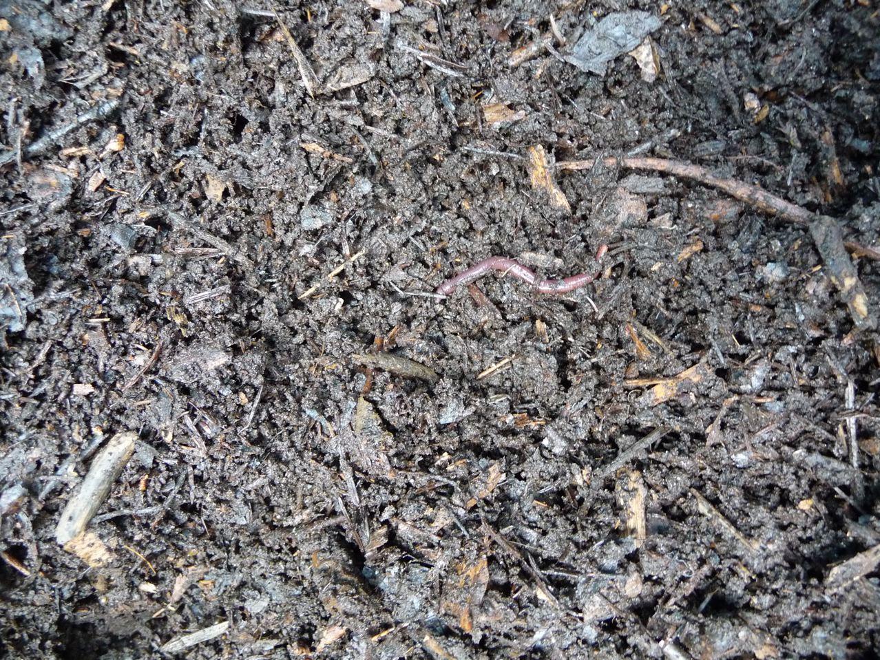 La faune du compost