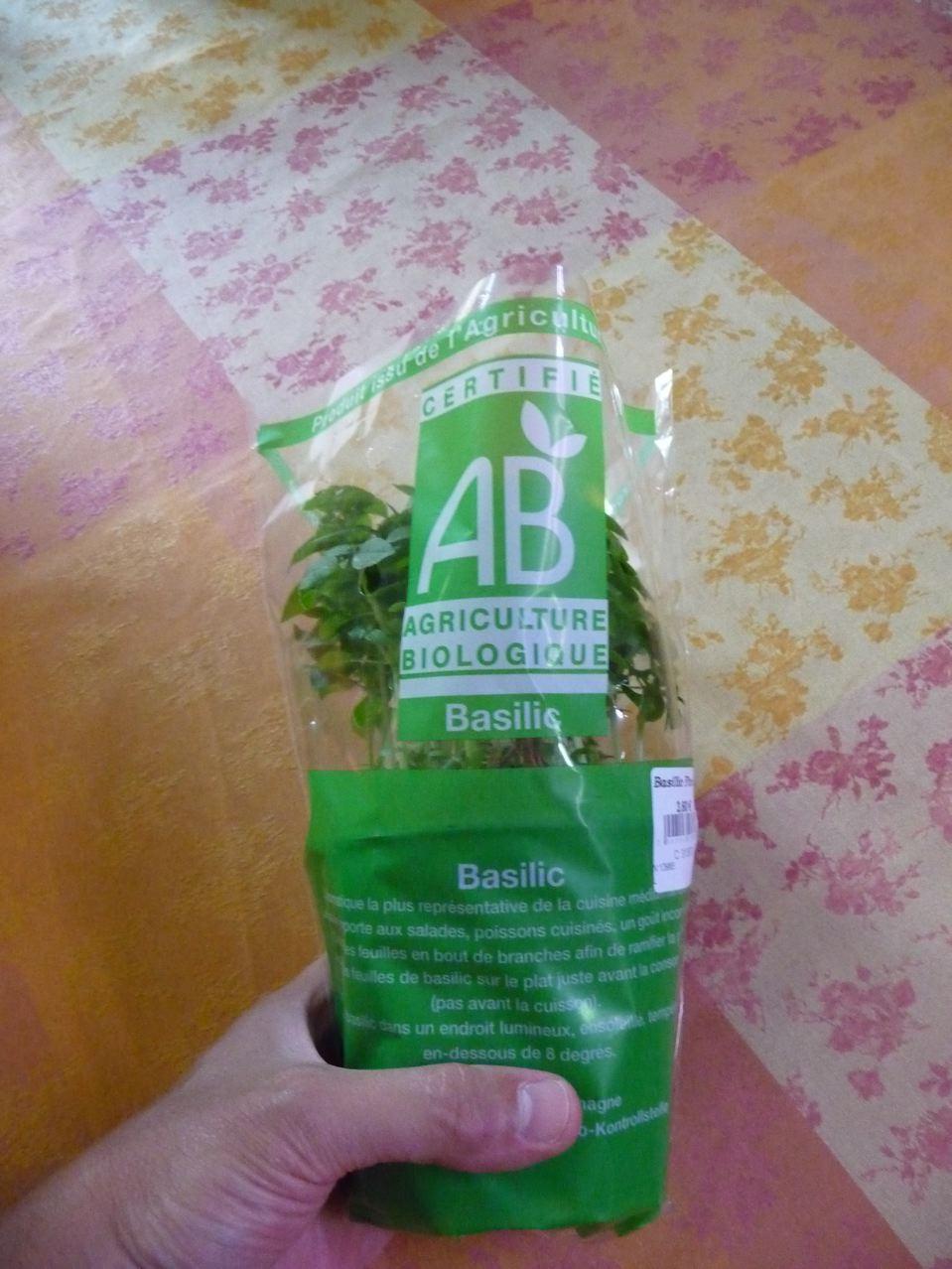 Plante aromatique bio