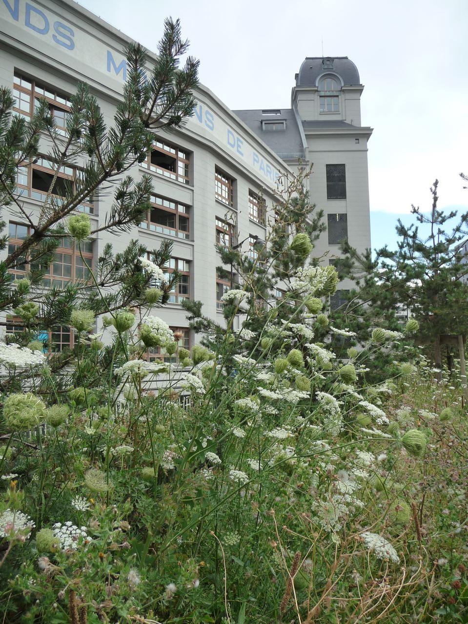 Fleurs sauvages dans Paris