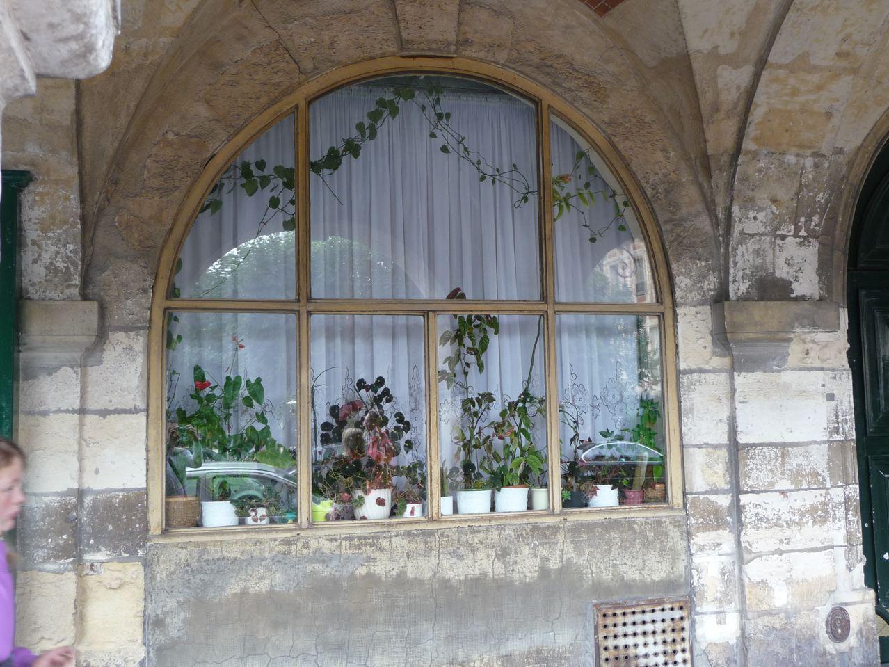 Mini jardin derrière la fenêtre en ville