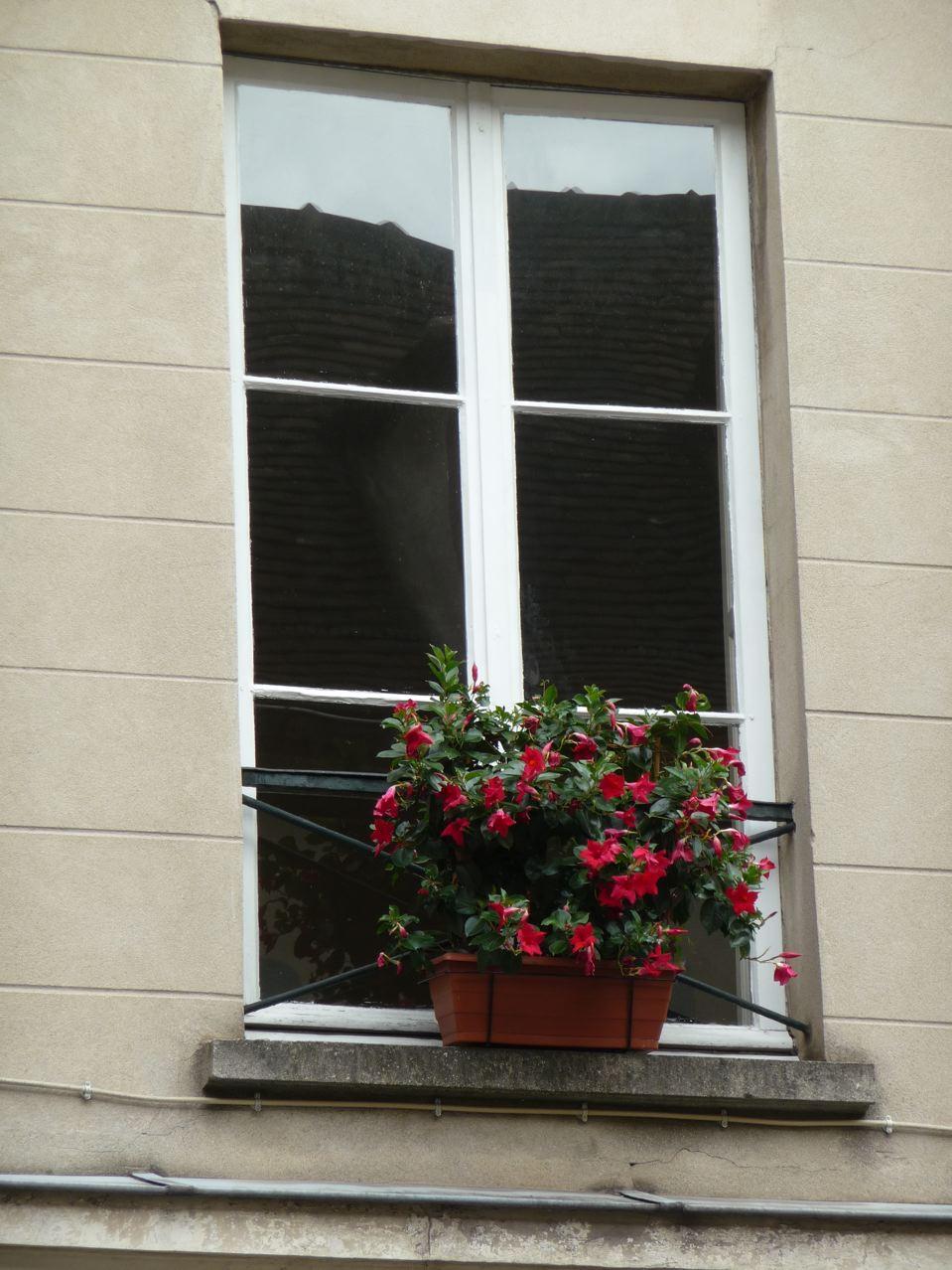 T fleuri paris c t jardin for Fenetre sur rue hugo