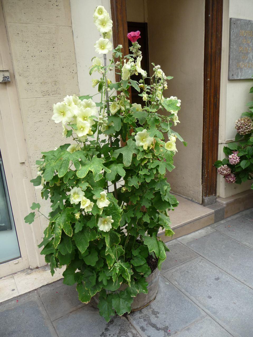 Potée fleurie estivale