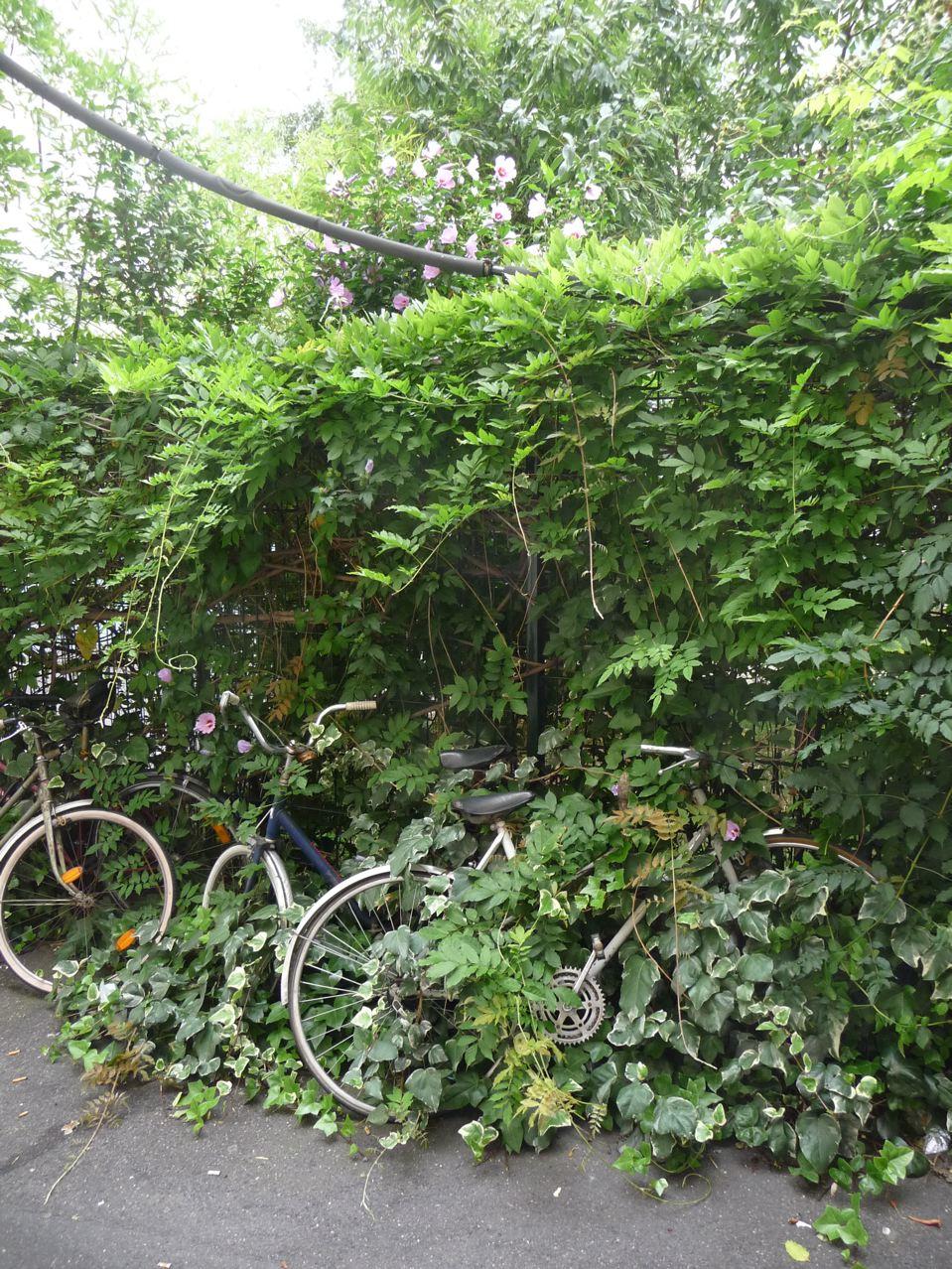 La nature gagne sur la ville
