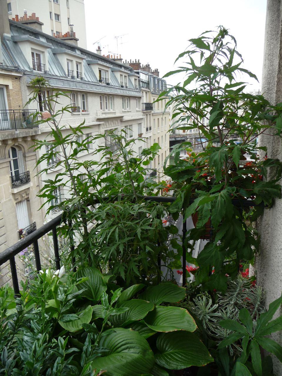 Plantes exotiques vivaces