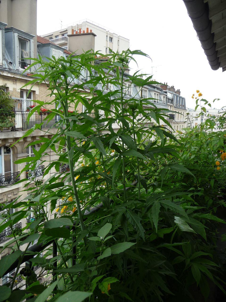 Plante exotique vivace