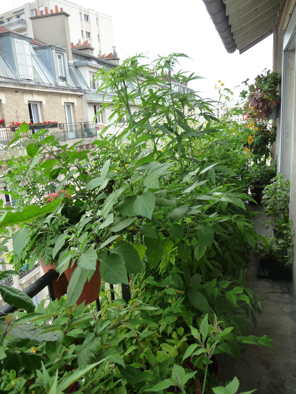 Petite jungle urbaine entre ciel et terre dans Paris