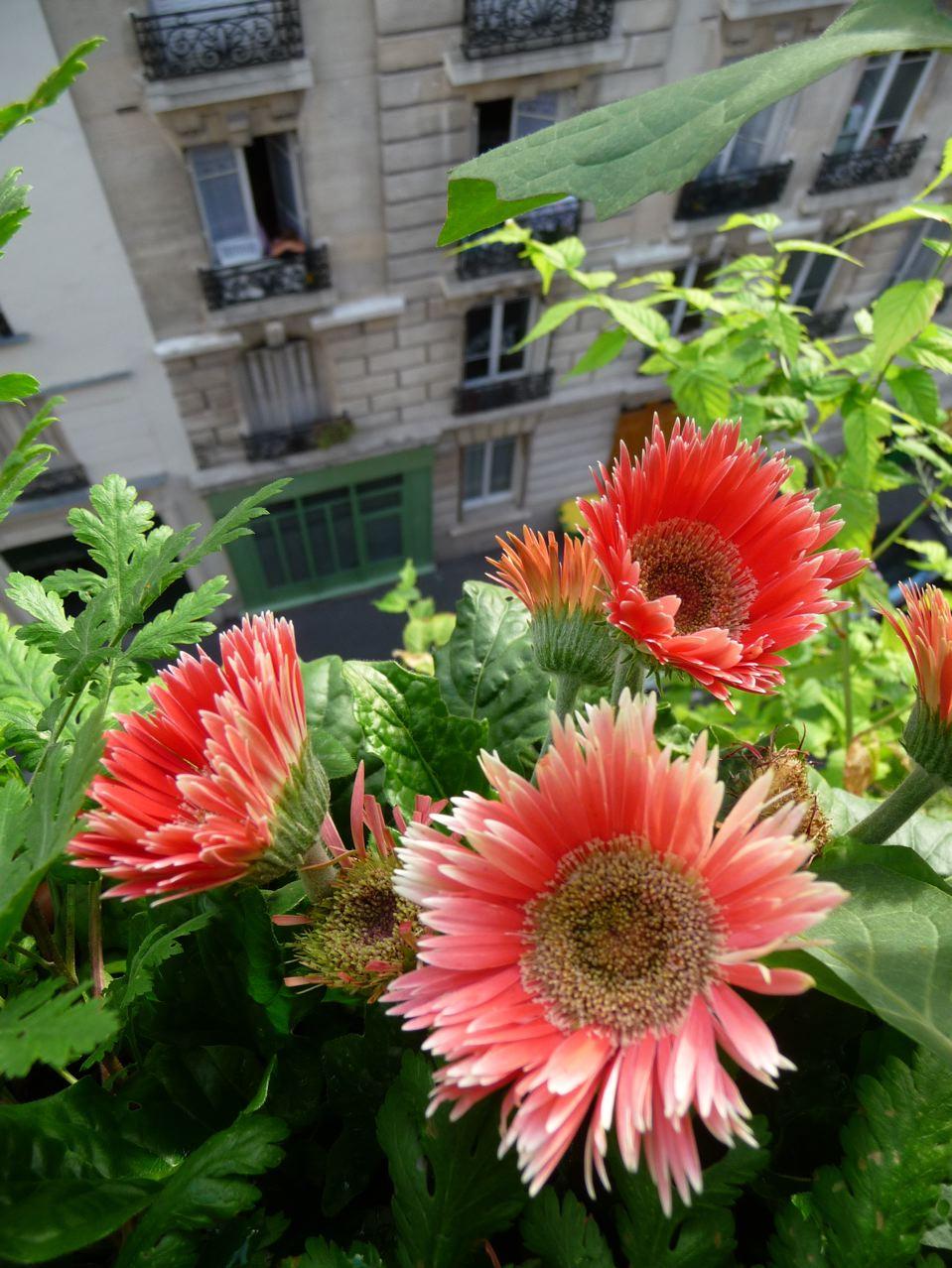 Jardin suspendu au 5e étage dans Paris