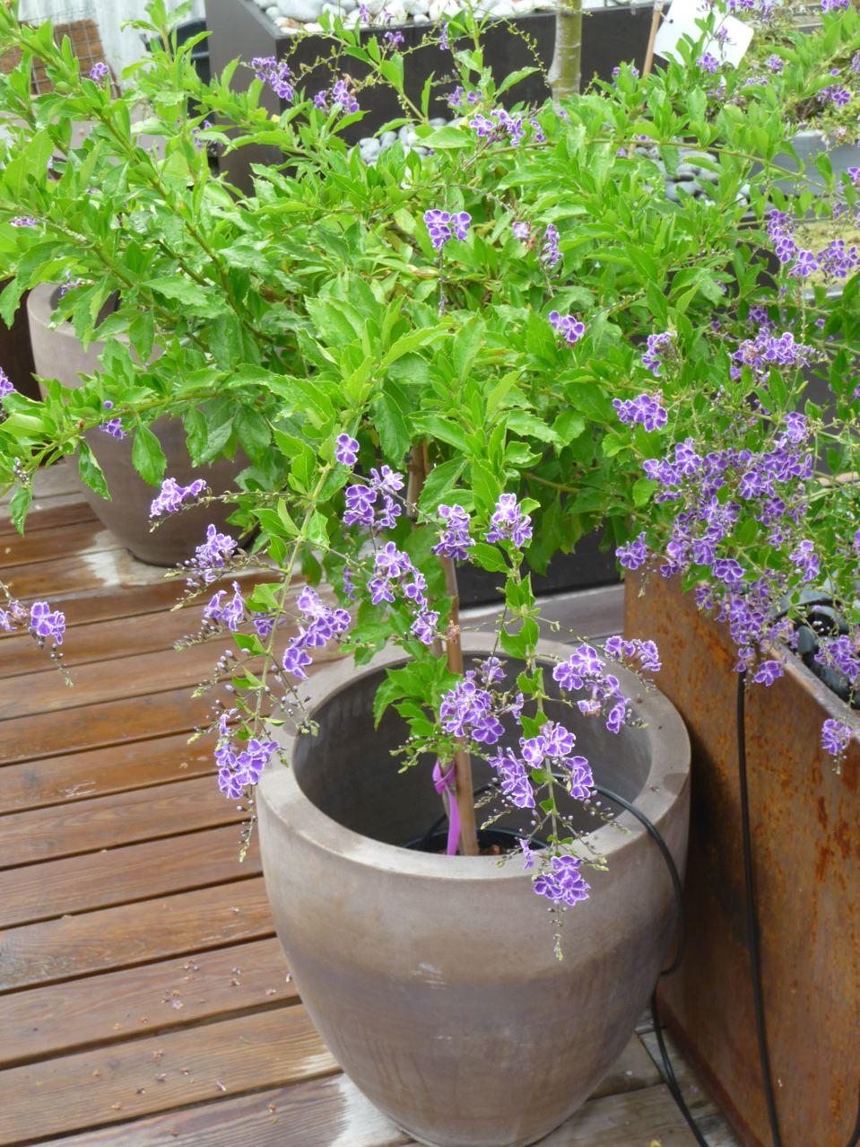 Fleur exotique paris c t jardin for Plante arbustive fleurie