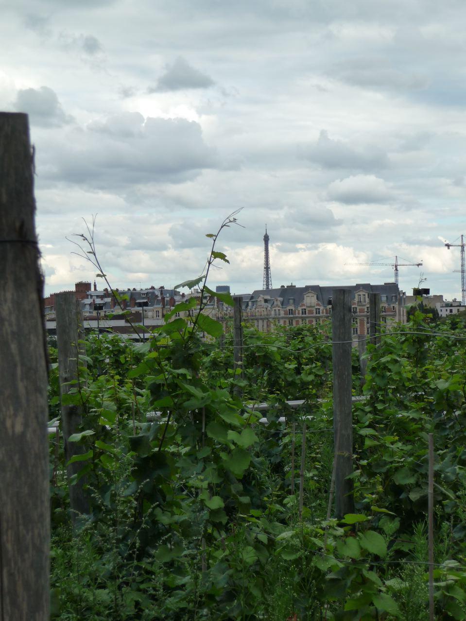 Vignoble francilien