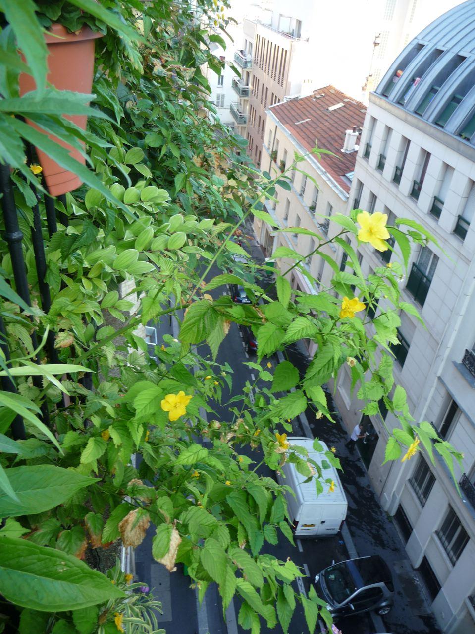 Jardin suspendu au 5e étage sur mon balcon