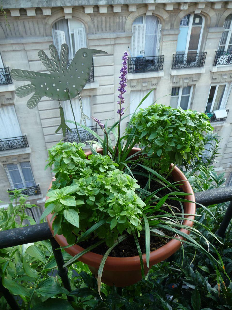 Mini jardin suspendu
