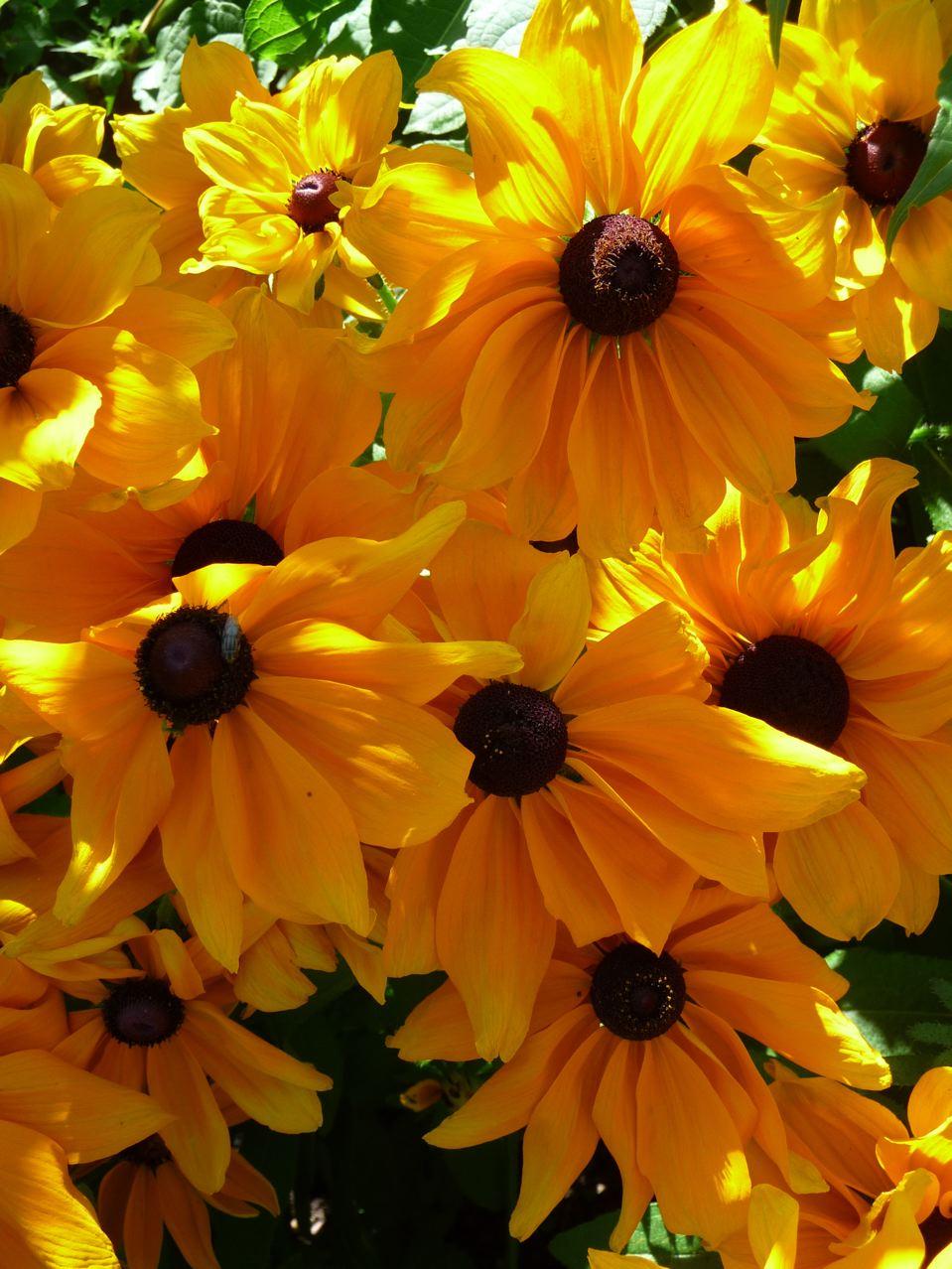 Décorations florales estivales
