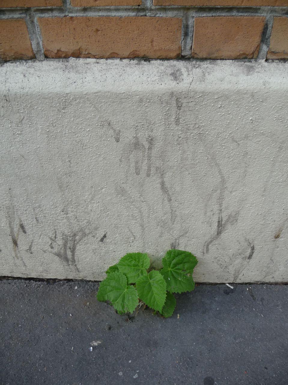 Semis d'arbre en ville