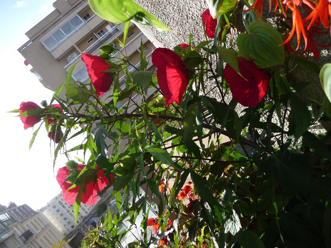 Plante exotique