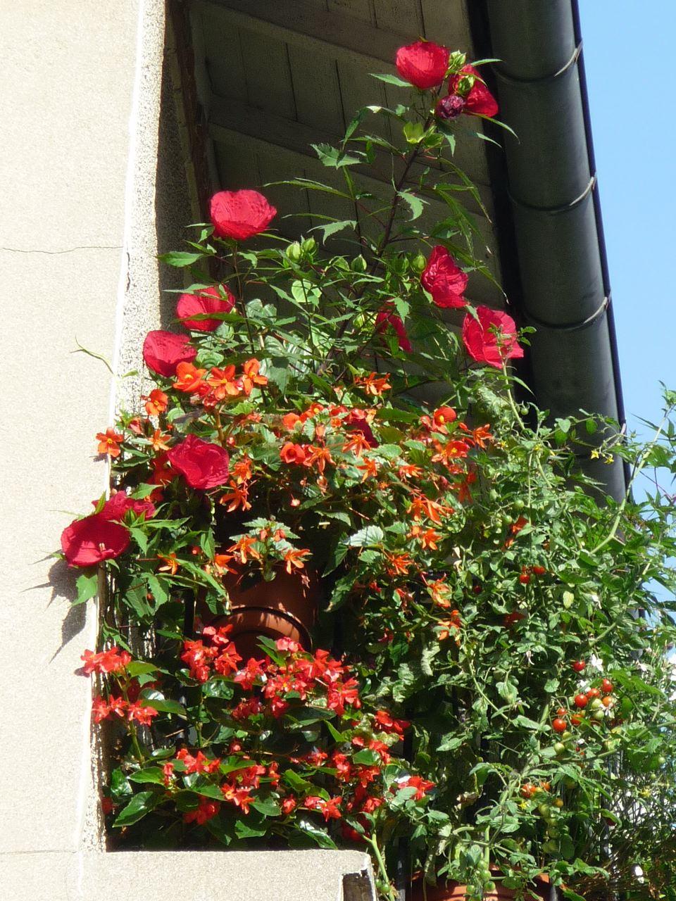 Balcon fleuri dans Paris