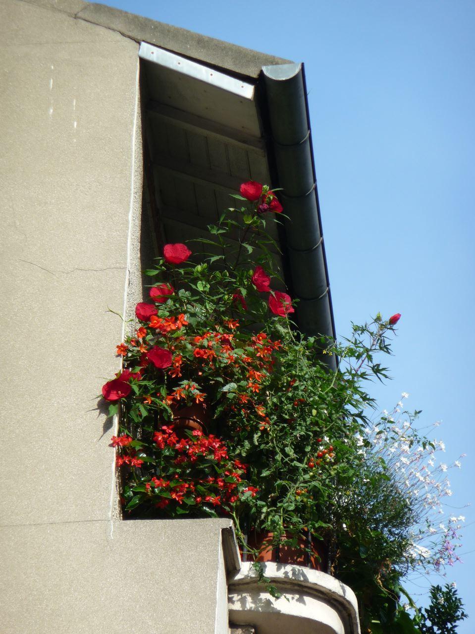 Balcon fleuri en ville