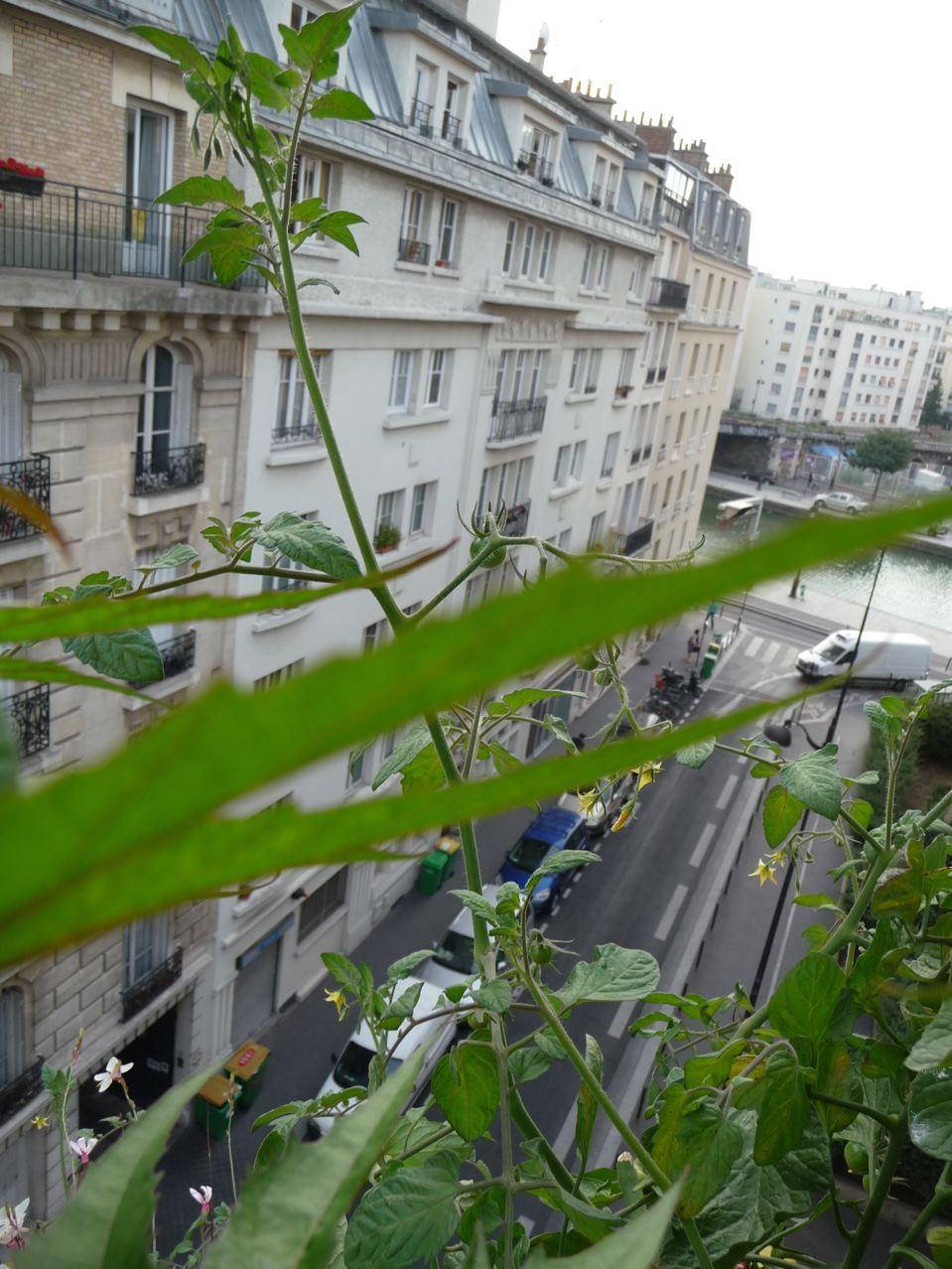 Légume en pot sur mon balcon en fin d'été
