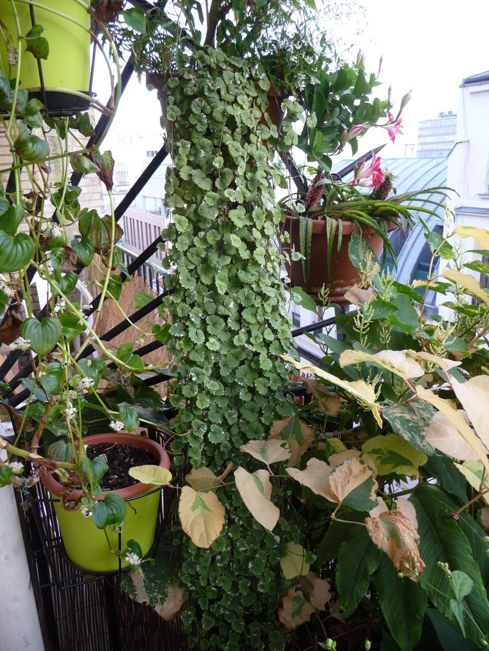 Plante vivace à feuillage décoratif