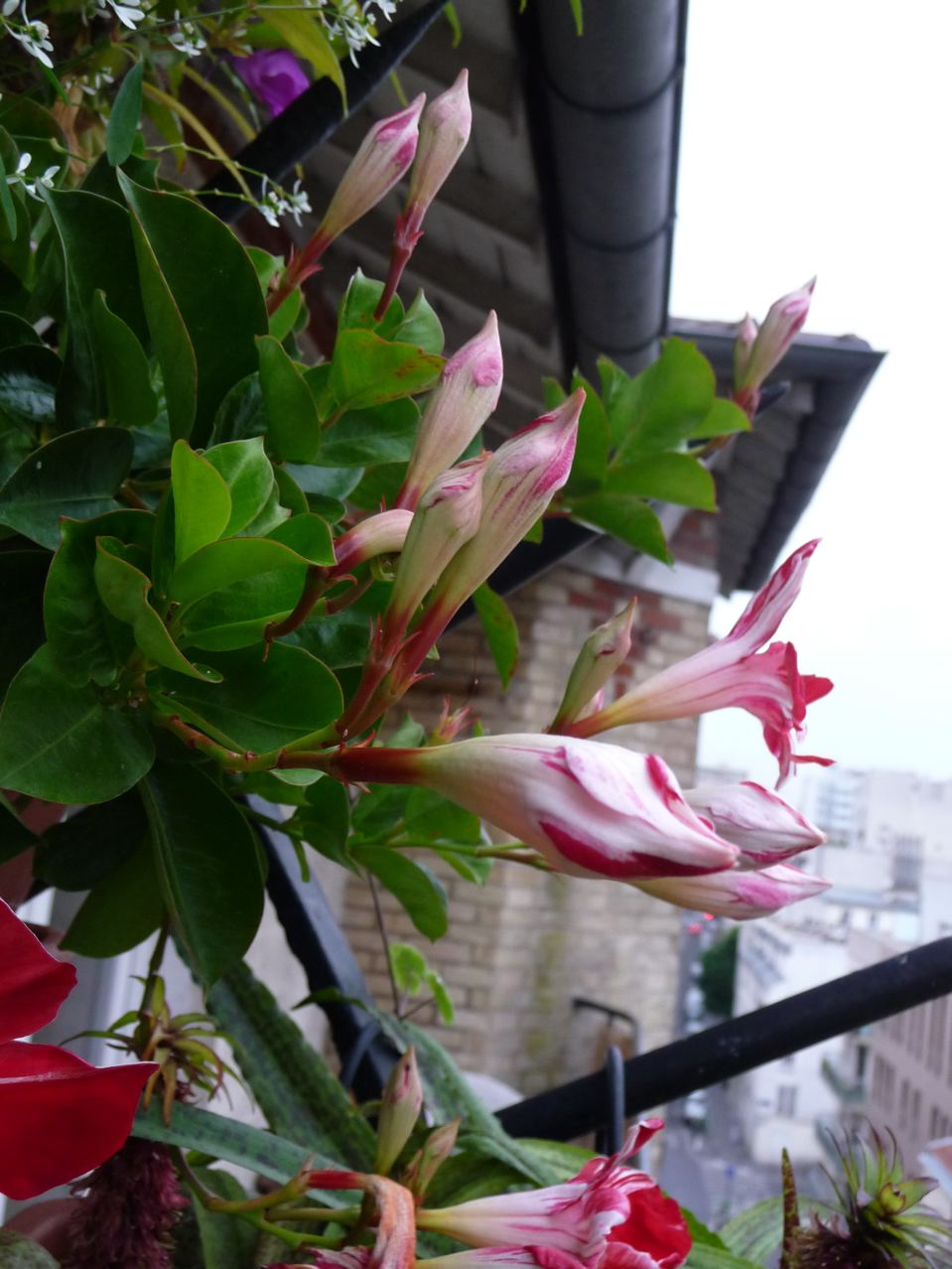 Suspension fleurie sur balcon fleuri