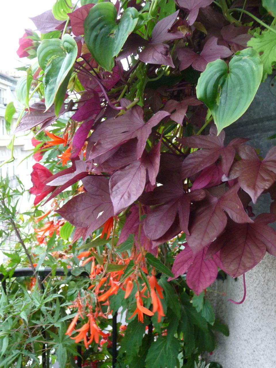 Décorations florales estivales sur mon balcon