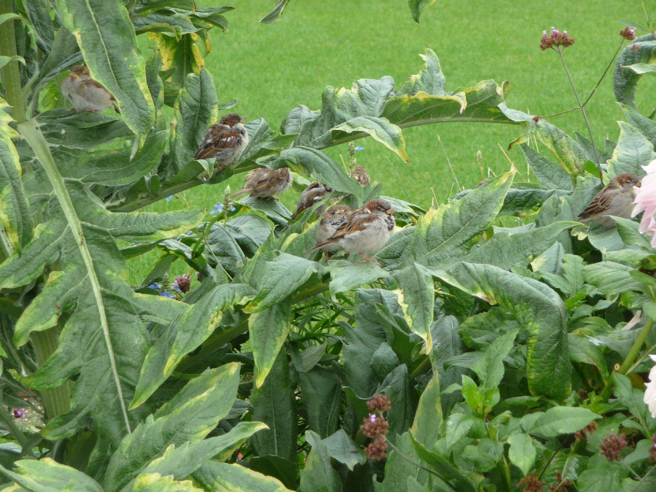 Perchoir végétal pour oiseaux parisiens