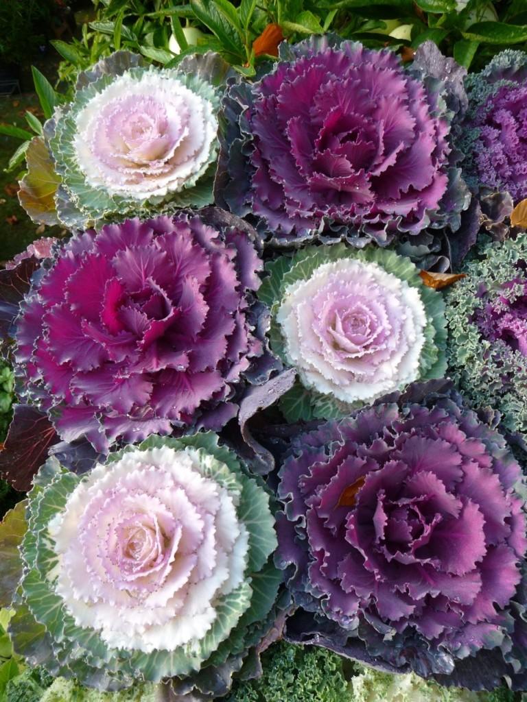 Légumes décoratifs