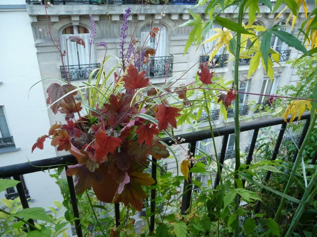 Plantes vivaces à feuillages et floraisons décoratifs