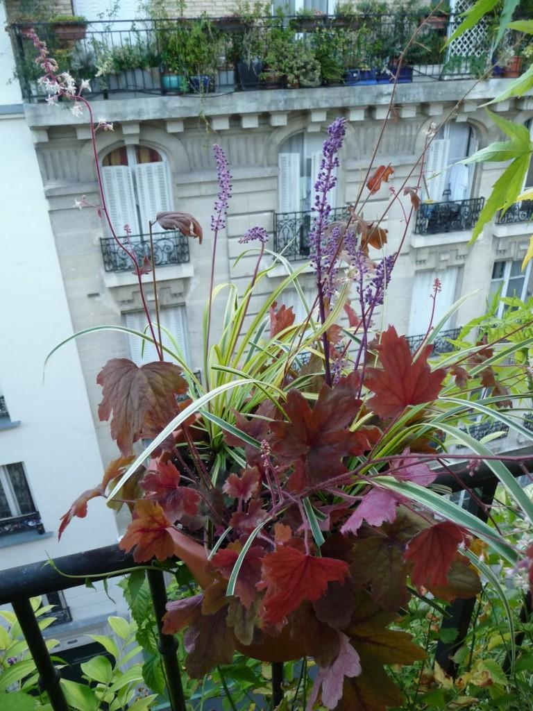 Plantes vivaces à floraisons et feuillages décoratifs