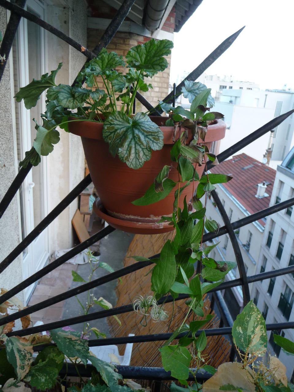 Suspension de plantes vivaces