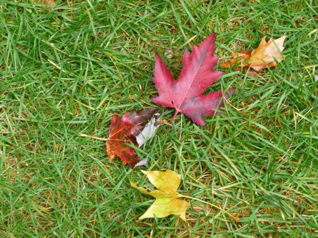 L'automne et ses feuilles mortes dans les jardins parisiens