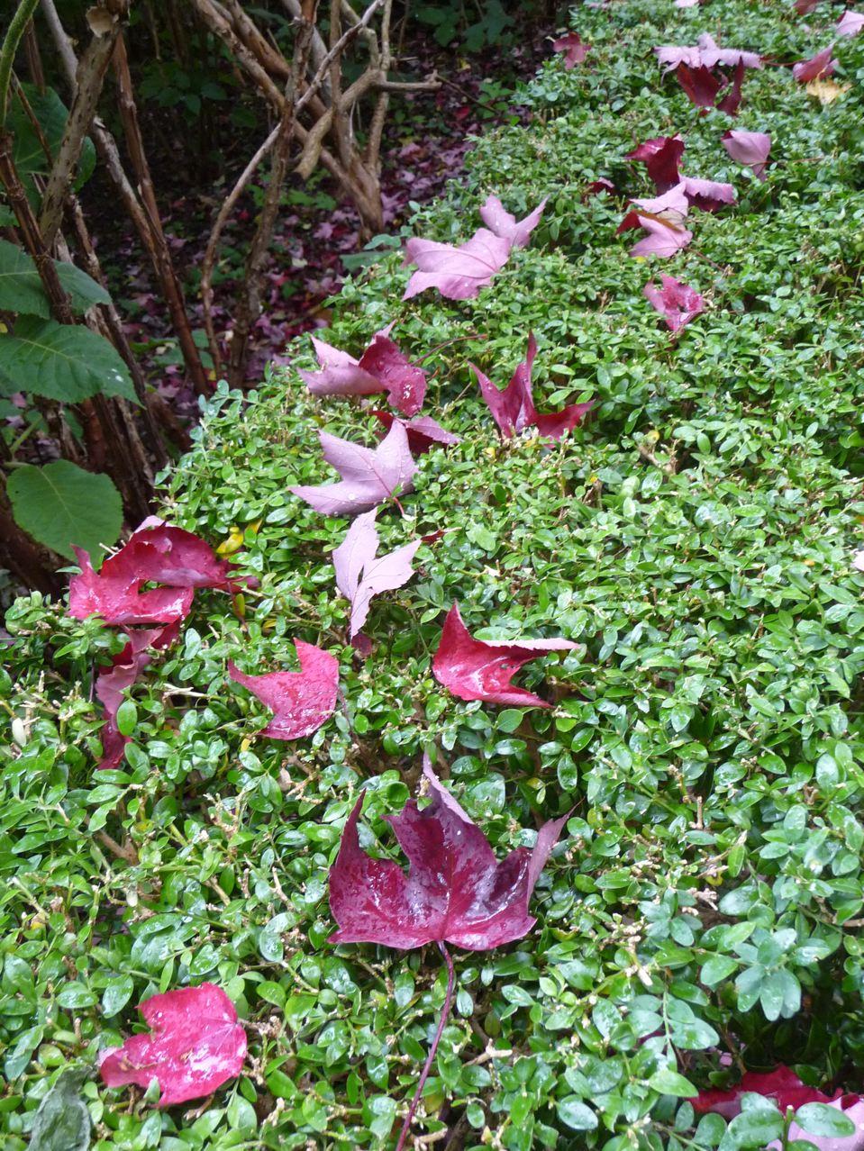 L'automne et ses feuilles mortes dans Paris