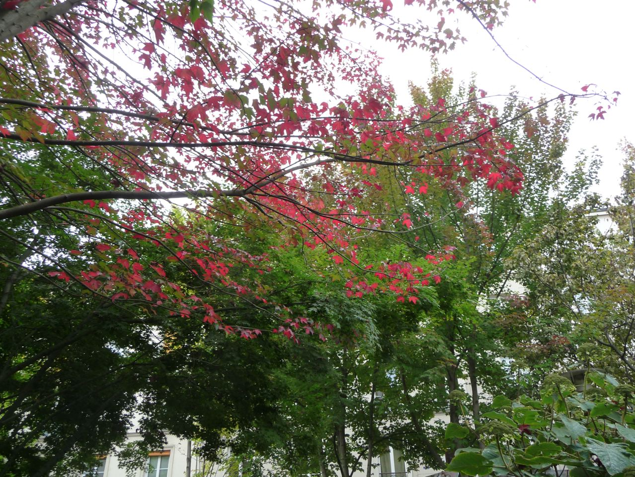 L'automne et ses couleurs flamboyantes dans Paris