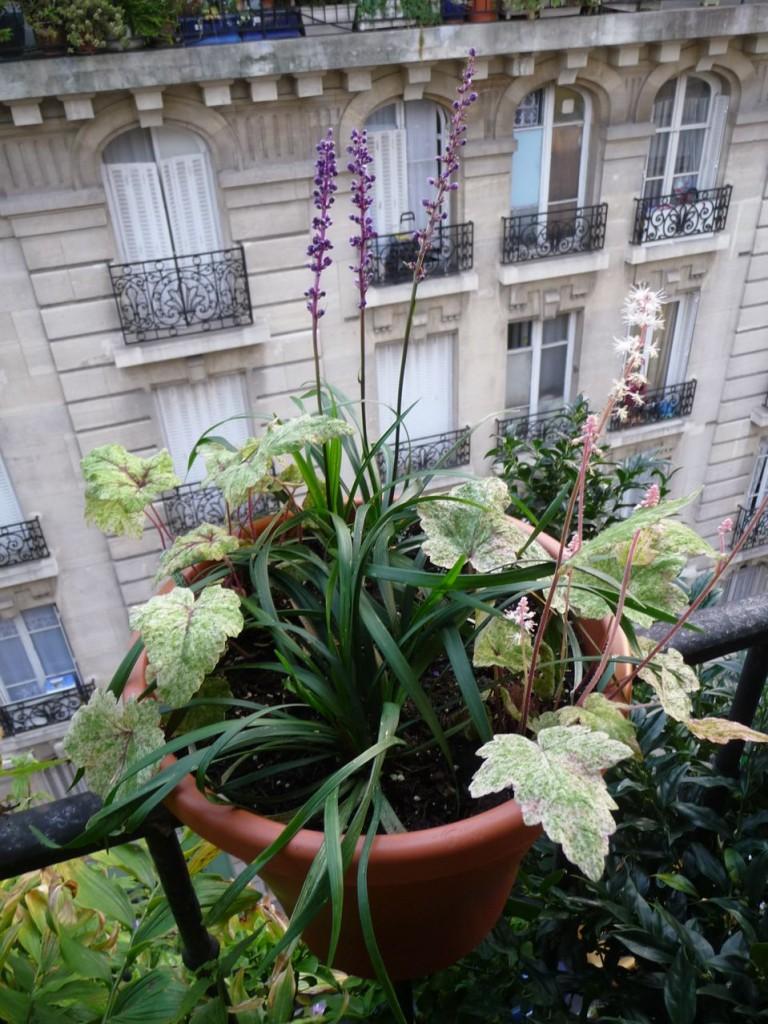 Plantes vivaces à feuillages panachés