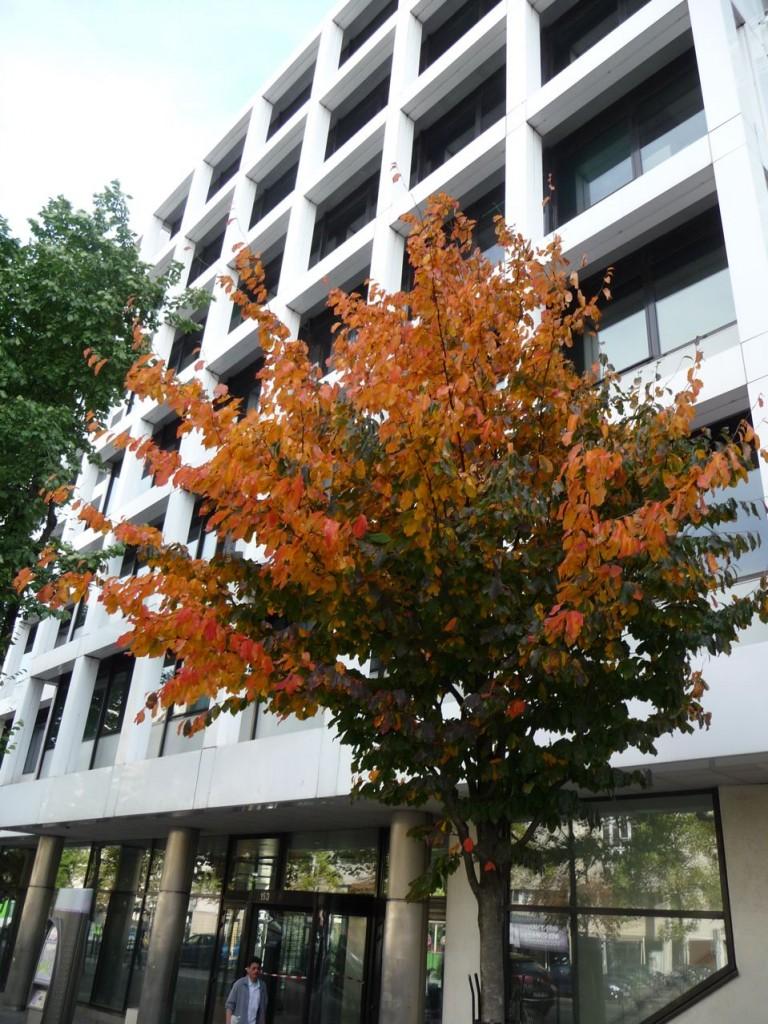 Feuillage d'automne dans Paris