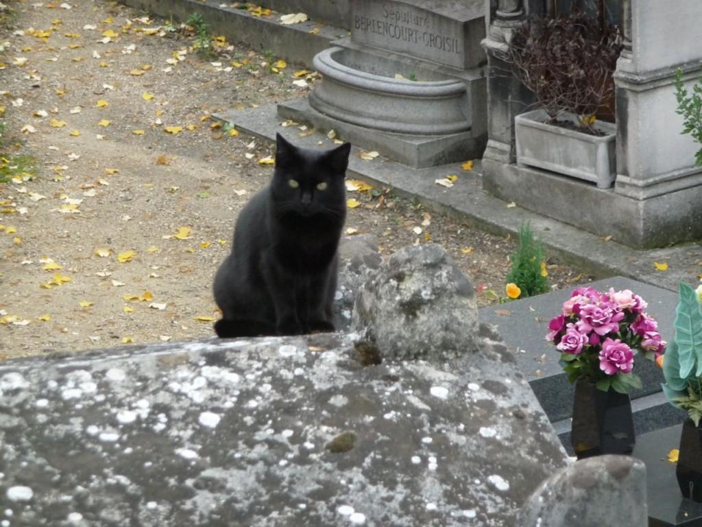 Le rendez-vous des chats de la Butte Montmartre
