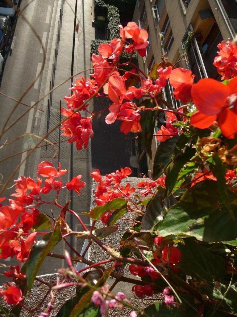 Fleur d'été et d'automne en ville