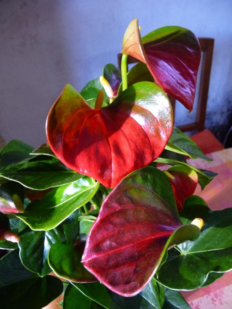 Plante d'intérieur à floraison exotique