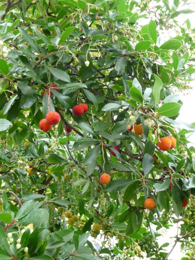 Arbuste à fruits en automne dans Paris