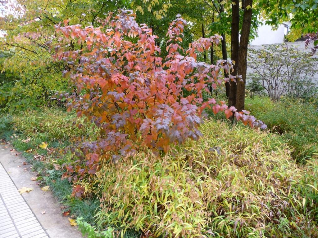 Scène d'automne dans un jardin parisien