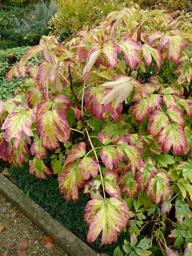 Feuillage décoratif en automne