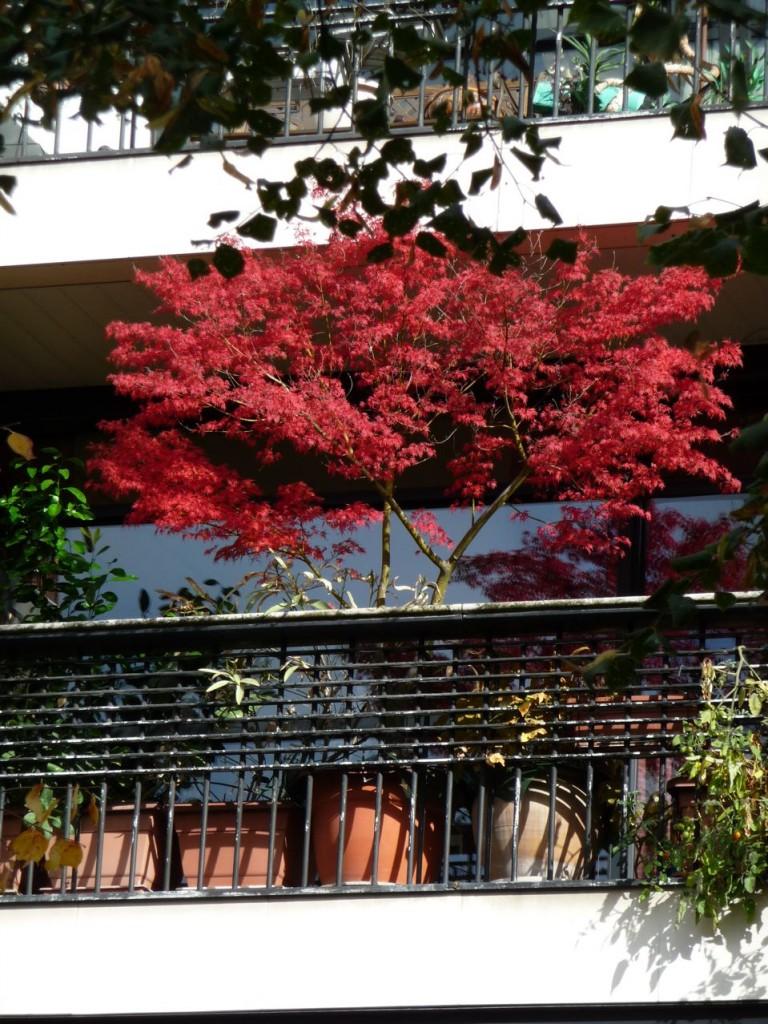 L'automne sur les balcons parisiens