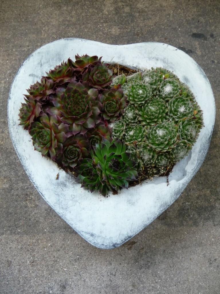 Jardinière de plantes succulentes sans entretien