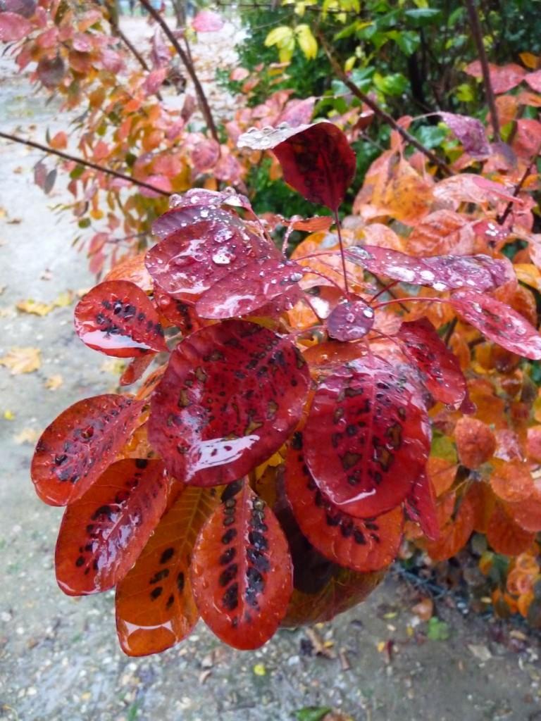 Les feuillages d'automne dans les jardins parisiens