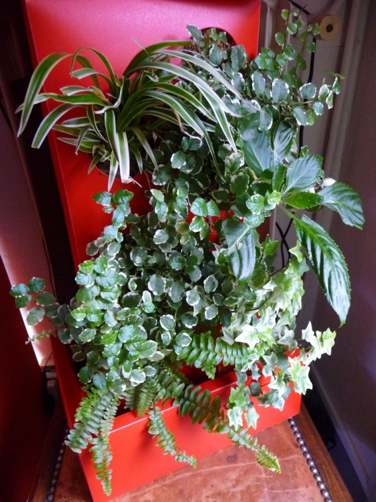 Colonne végétale plantée de plantes d'intérieur