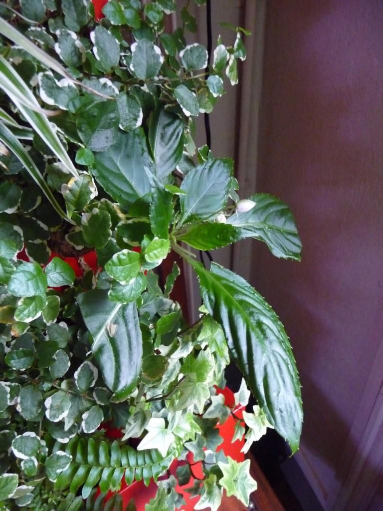 Colonne végétale de plantes d'intérieur