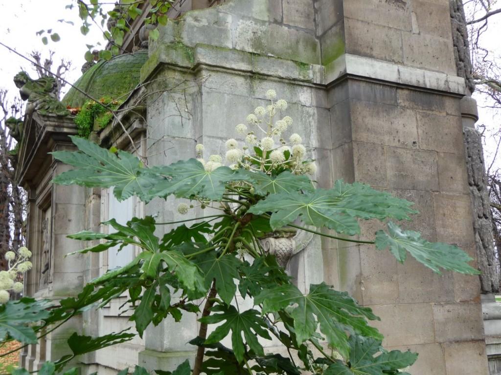 Arbuste persistant à floraison automnale