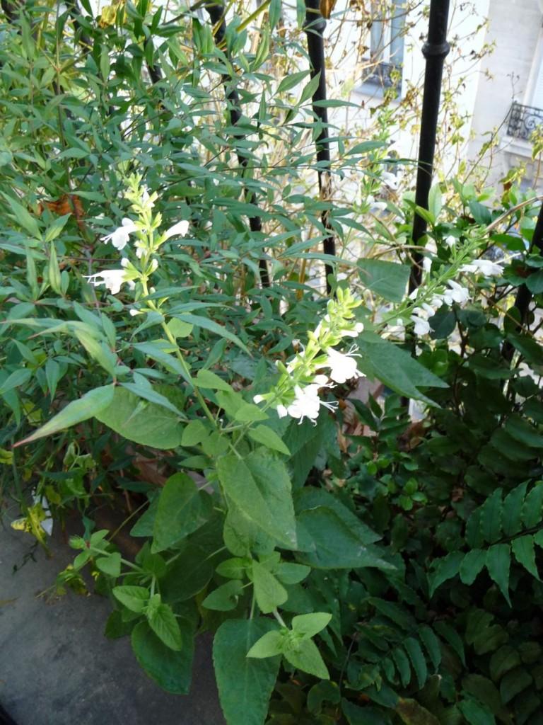 Floraison remontante pour un balcon fleuri en automne